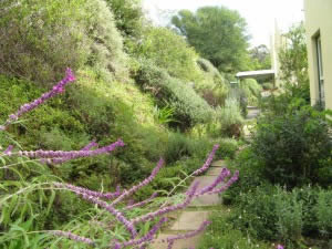 Retaining wall planted with indigenous plants