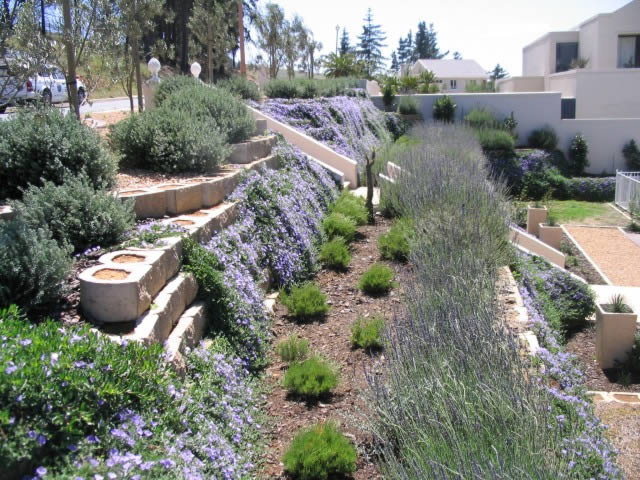 Plant Growth Finishes Off A Terraforce Retaining Wall