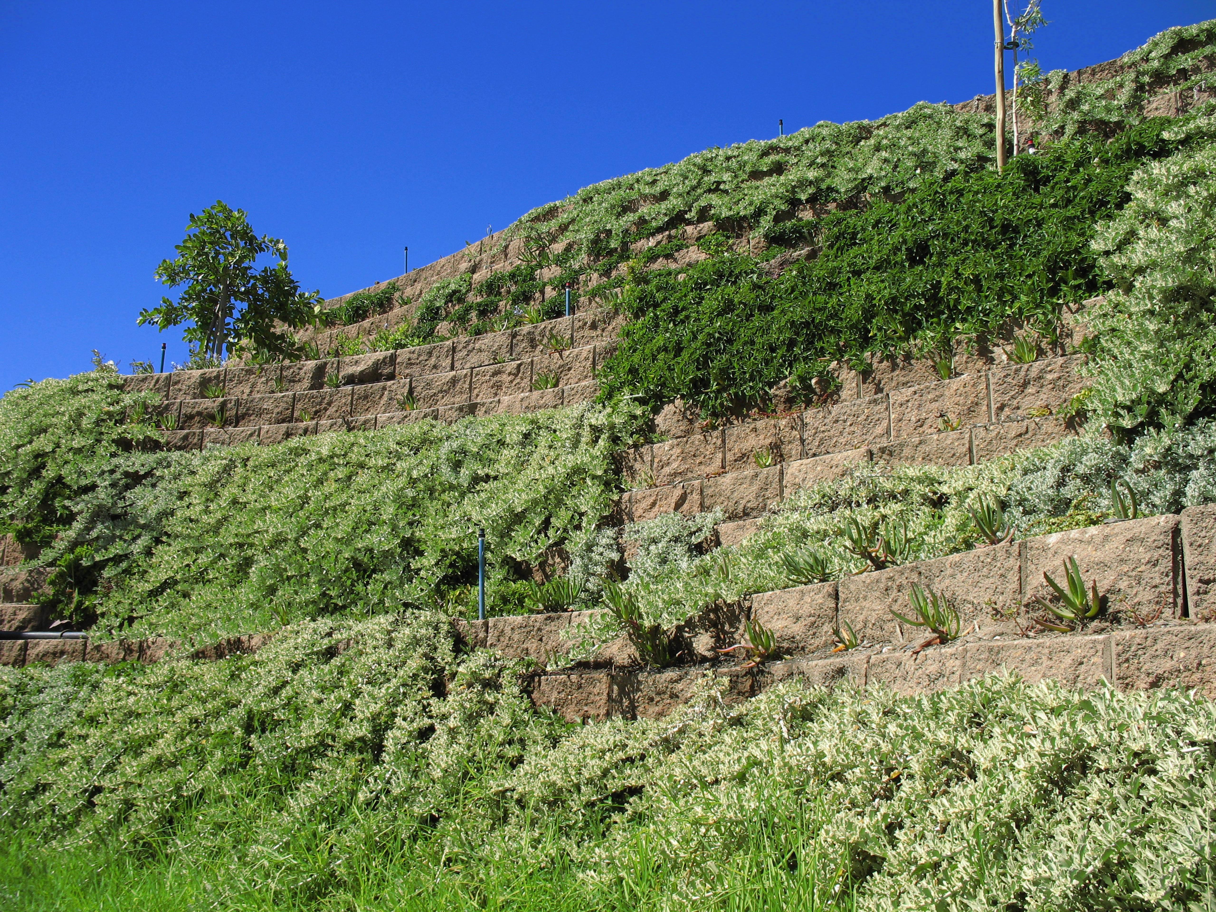 Hardy plant varieties prevent wind erosion
