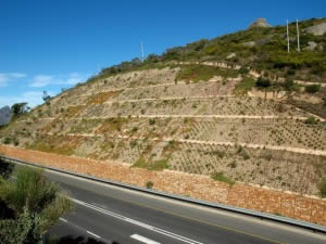 Vegetation takes Hold on the Rehabilitated Slope
