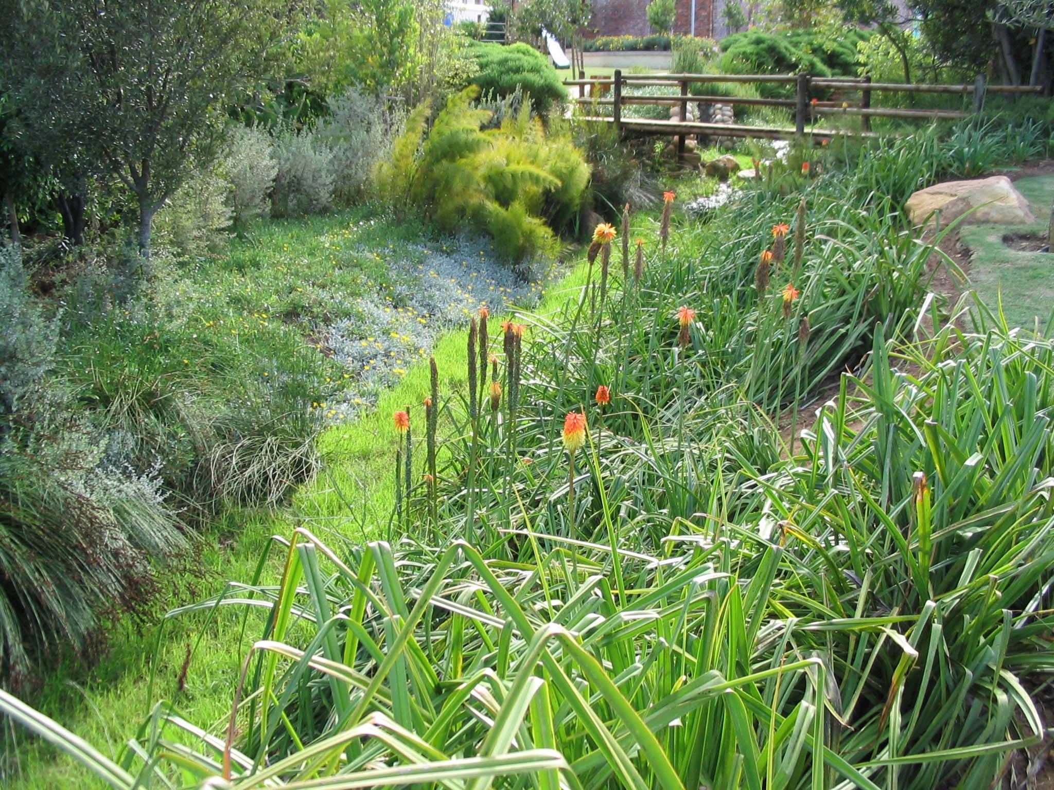 Indigenous Plants cover the Terrafix blocks