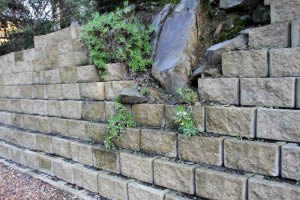 Gaps were left for boulders to blend into the retaining wall