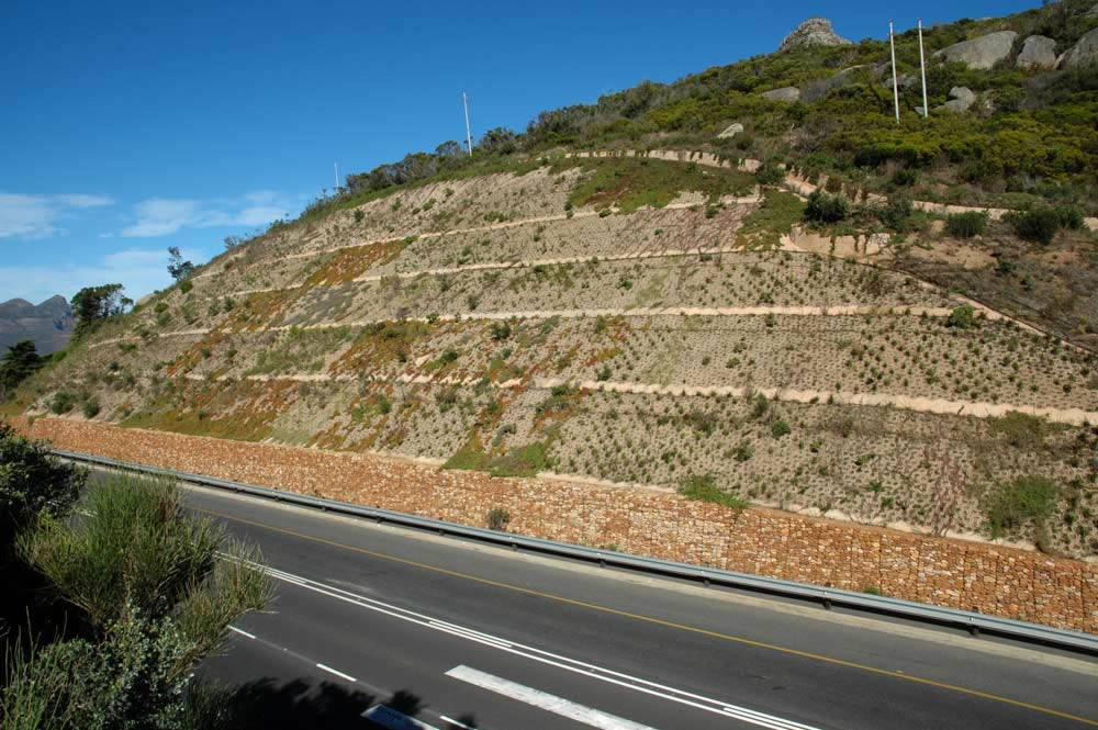 The slope with vegetation taking hold