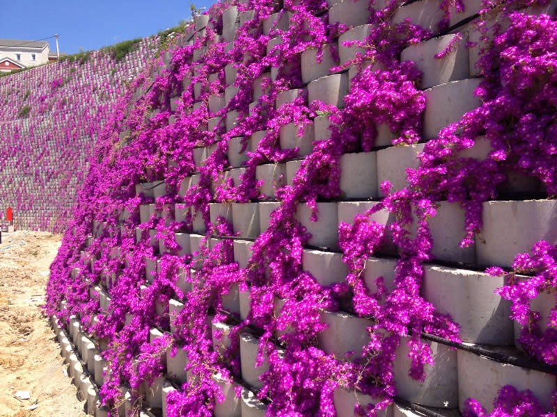 Add a splash of colour, retaining wall in Istanbul