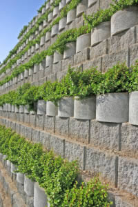 Water-wise plants drape over the side of the block rows