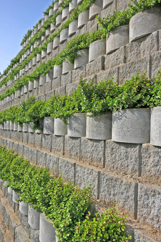 Water-wise plants drape over the side of the blocks rows
