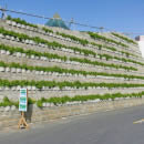 Green wall innovation at a new children's hospital in Dubai