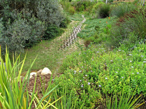 Terrafix river bed and bank erosion control, fully planted and rehabilitated