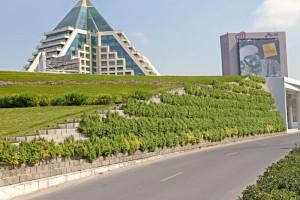 3.Al Jalila Children's Hospital. Planting is Portulacaria afra. (spekboom)