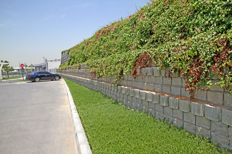 More than two year later, and the plant growth is busy covering most of the wall on both sides of the barrier