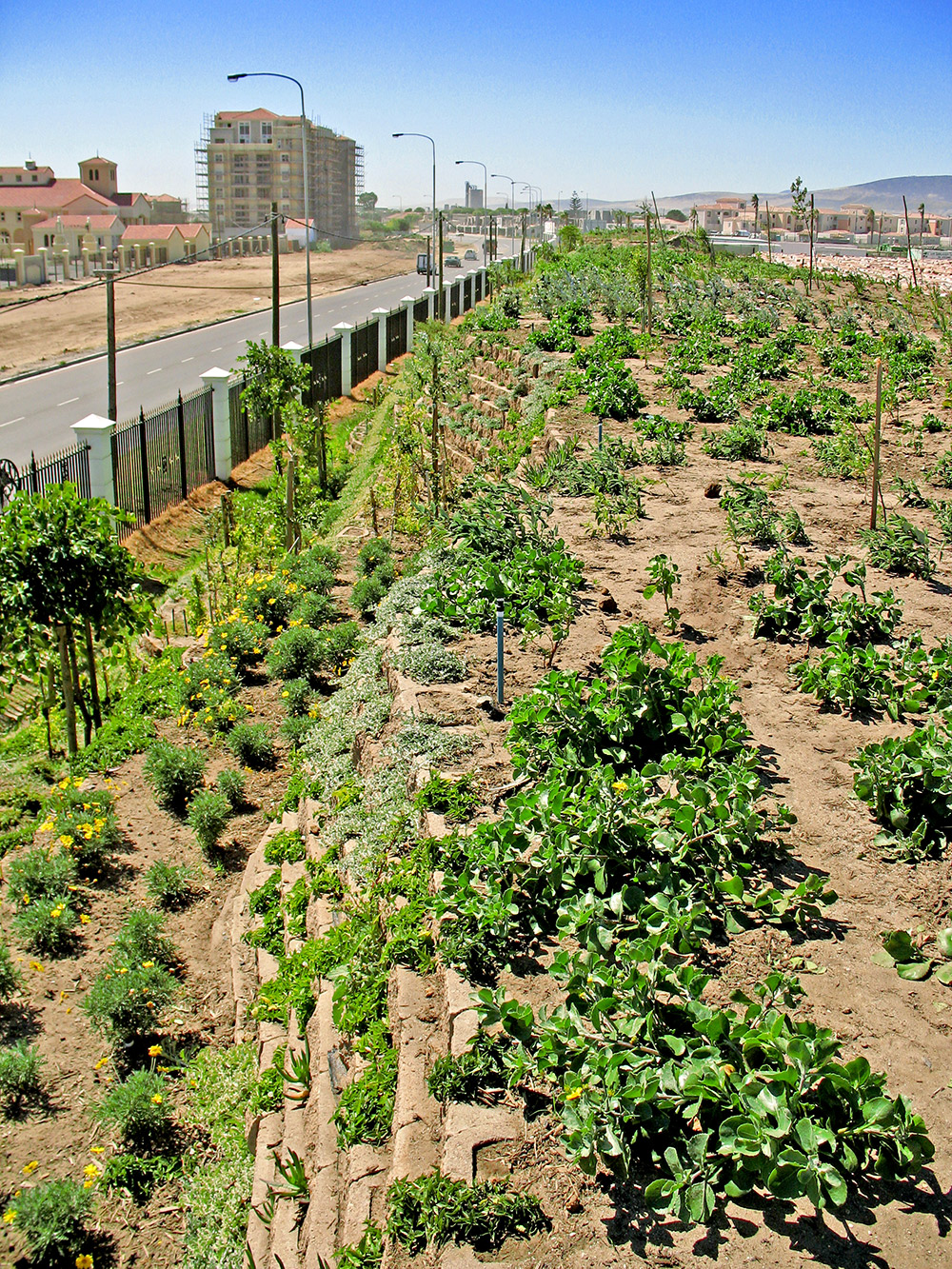The landscaping team used the terraces to good effect by creating almost instant hanging gardens with mostly water wise indigenous planting.