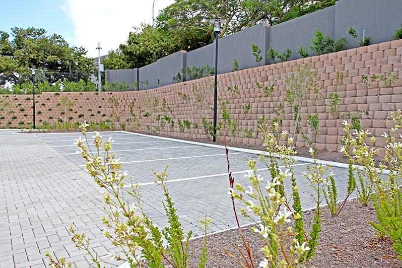 Planting in 2014, pre-drought, Terraforce wall