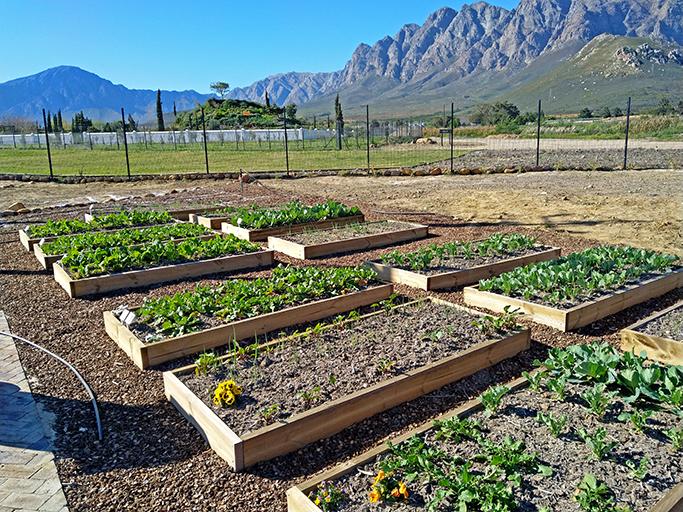 Vegetable garden on the premises