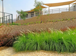 Soft grasses add stunning finishing touch to the hardscaping