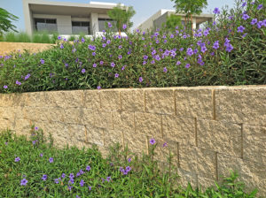 Close-up of the walls with beautiful purple flowers