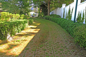 Beautifully grassed driveway, Glen Dirk Estate
