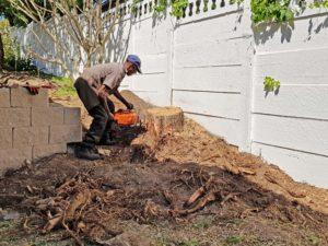 Trim, cut, stump removal & prune